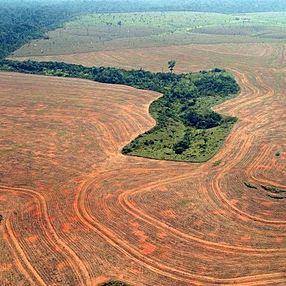 Sept milliards sur la Terre : comment tous les nourrir sans détruire la planète ?