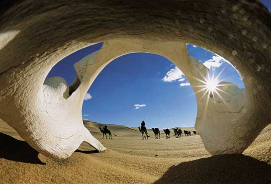 sahara desert camels - Pic Ov Da Day 10th april 2013