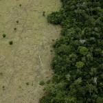 Brazil and Indonesia committed to slow down deforestation