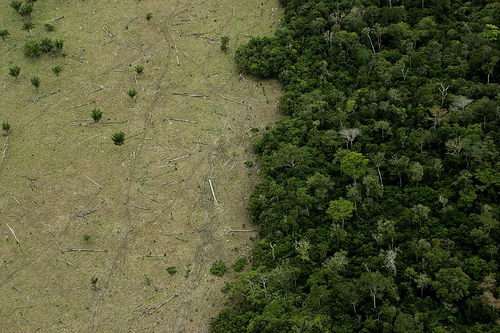Amazon Rainforest Deforestation Before And After